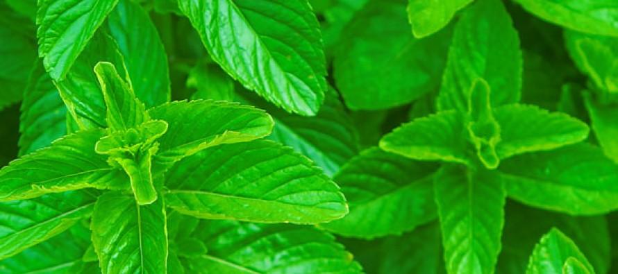 Ядовитые и съедобные растения