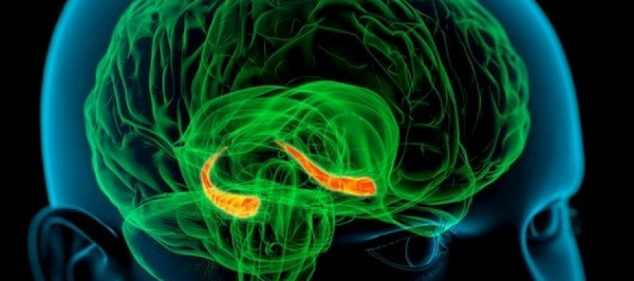 Исследование нейрогенеза