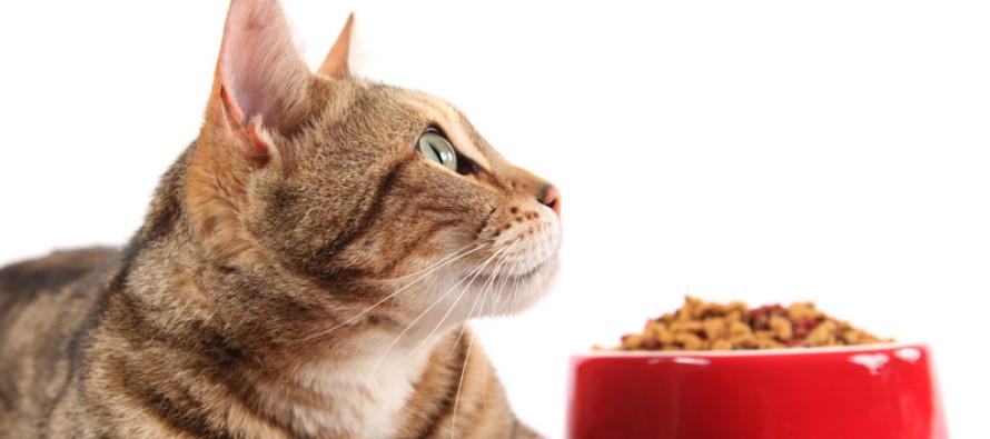 Полноценные корма для животных