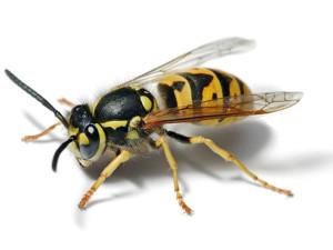 яд от насекомых