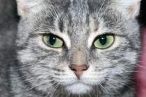 Cтерилизация кошек